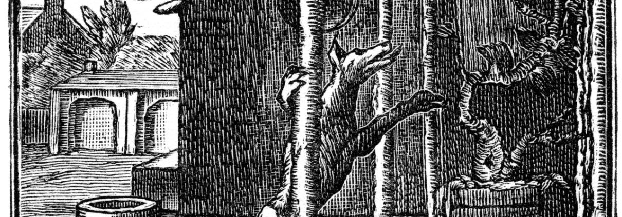 fabula de la zorra y las uvas / ESopo